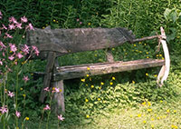 Landscaping with Driftwood Bench