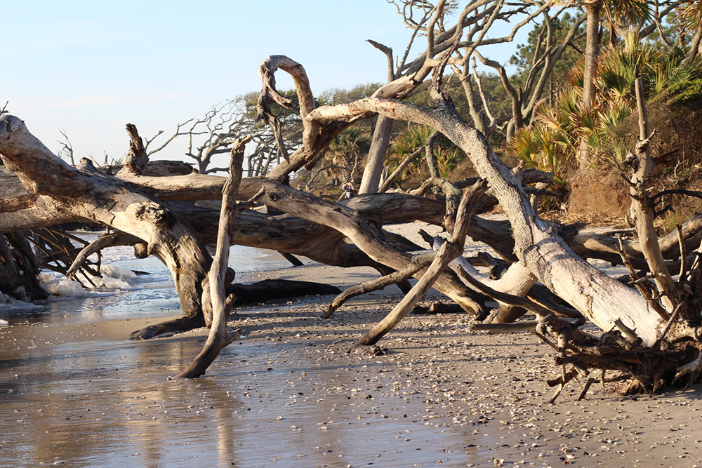 Where to get driftwood