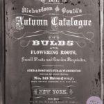Autumn Bulb Catalogue