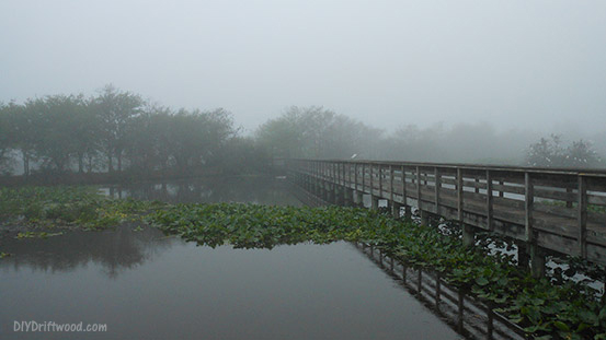 Early morning mist at Wakodahatchee