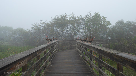 Wakodahatchee Boardwalk in the early AM