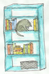 cat in bookcase